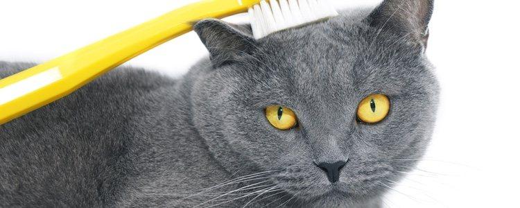 Un cepillado semanal ayudará a tu gato a evitar enfermedades bucales