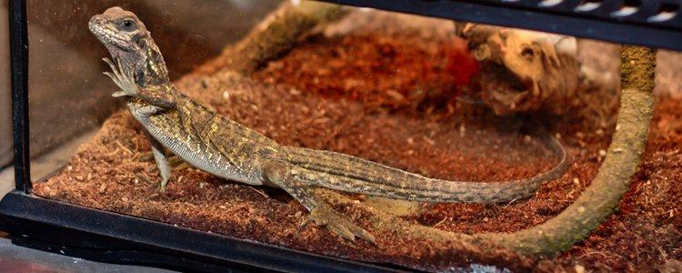 Los terrarios reproducen los hábitats naturales de animales exóticos pero en recipientes artificiales