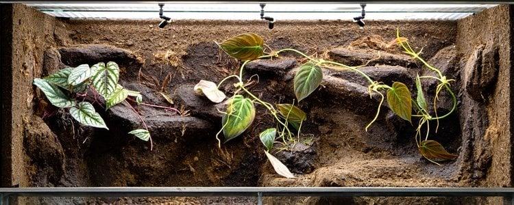Asegúrate que en los terrarios dispones de un elevado nivel de humedad para emular zonas tropicales