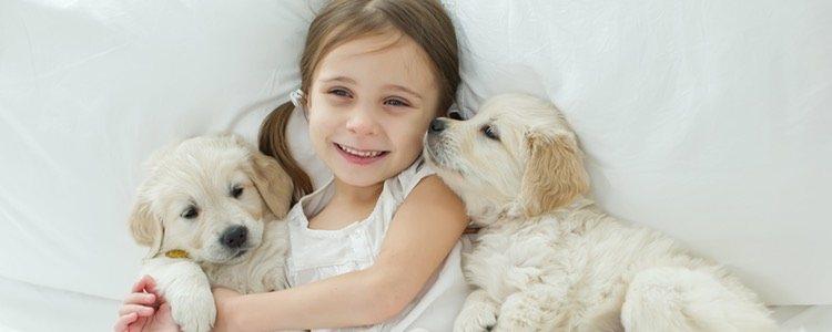 Los cachorros sociables se adaptarán a cualquier miembro de la familia