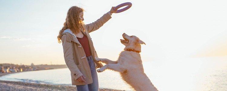 Un perro con personalidad extrovertida necesitará mucha atención