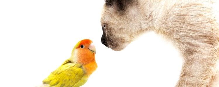Los agapornis son unos pájaros muy socibles