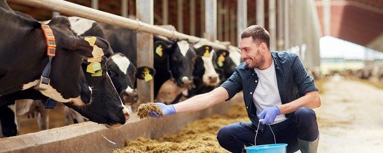 No se pueden incluir animales destinados a la explotación ganadera