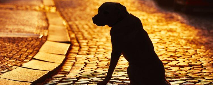 Los perros de los refugios pasaron por la situación de abandono