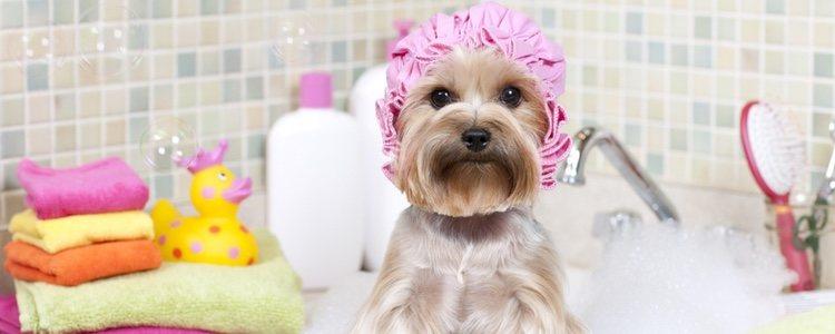 El aloe vera ayudará también a la piel de tu perro
