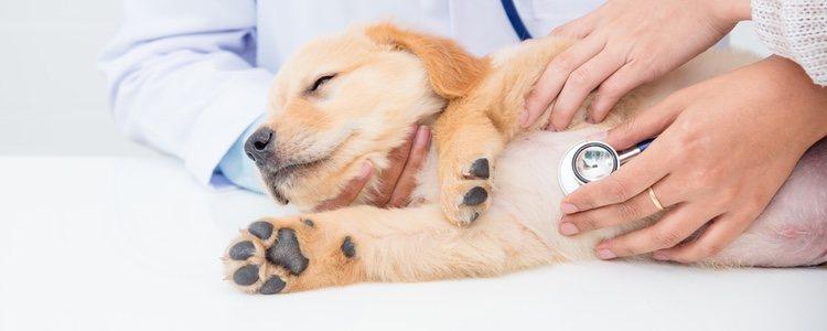 Visita al veterinario para que haga un diagnóstico adecuado