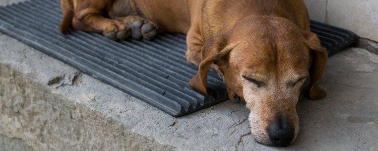 En la mayoría de los casos no se administra ningún tipo de medicamento en el animal