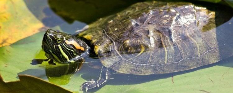La luz natural es fundamental para que las tortugas estén sanas