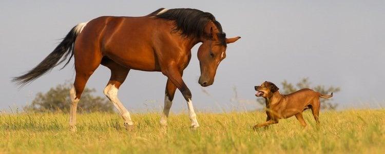 Un caballo jugando con un perro en un campo