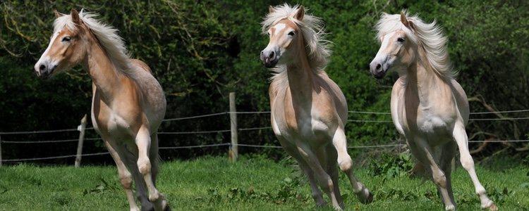 Los caballos solían correr libres por el campo