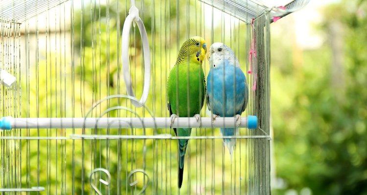 Las intoxicaciones pueden generar la muerte súbita de tu pájaro