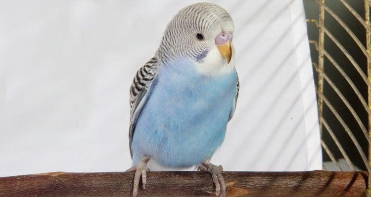 Los accidentes pueden ser muy problemáticos para los pájaros