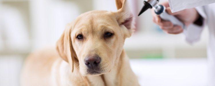 La otitis provoca un dolor intenso en los oídos