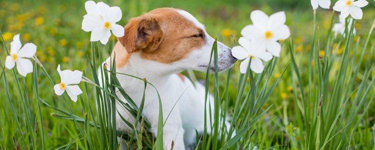 Pueden ser alérgicos al polvo al polen e incluso a marcas de comida