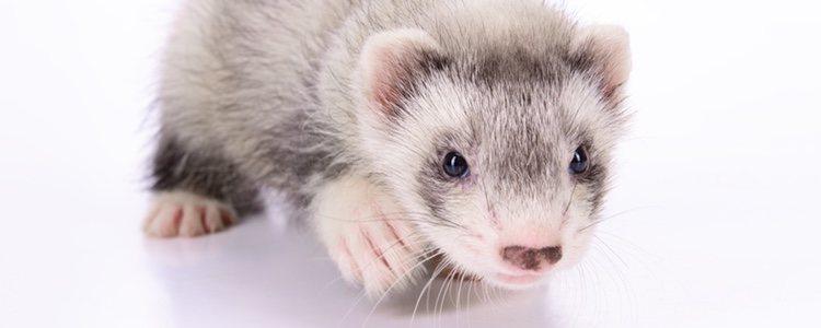 A pesar de su aspecto adorable, son animales que devoran a sus presas