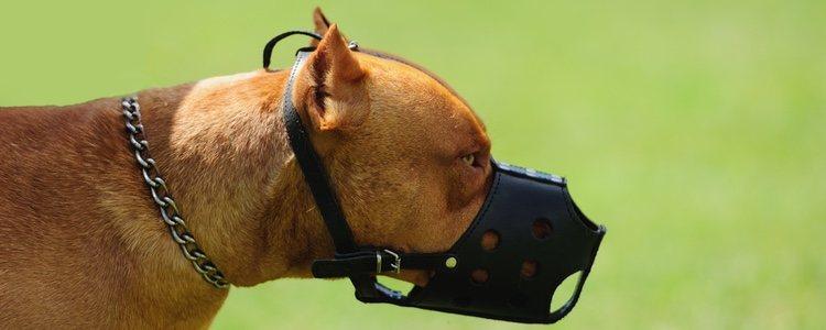 En todos los espacios públicos, los perros peligrosos deben llevar bozal