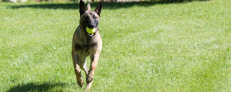 La base del adiestramiento en positivo es premiar las buenas conductas del perro