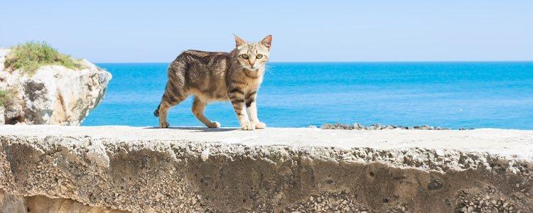 Recuerda que no es lo mismo viajar con un perro o un gato