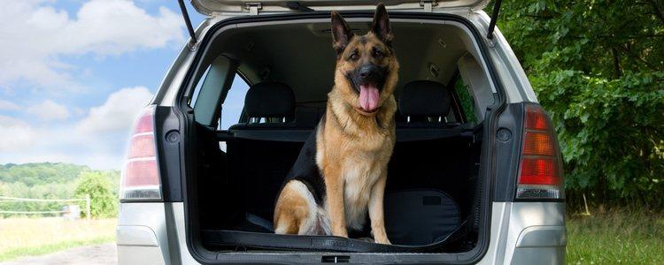 Nuestro perro necesitará más o menos vacunas dependiendo del país al que viajemos