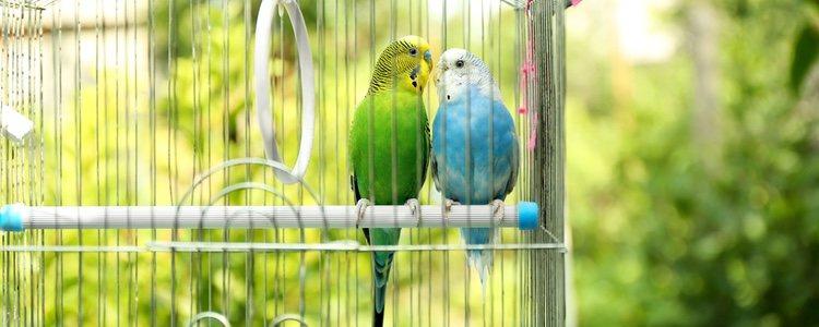 Los pájaros poseen colores muy llamativos