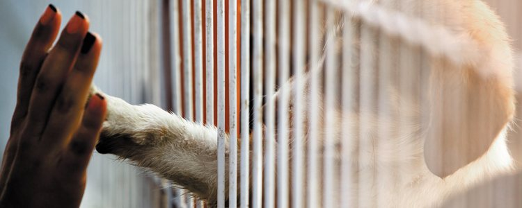 Las perreras y las organizaciones que cuidan a estos animales no dan a basto con tanto animal abandonado