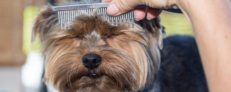 Los tratamientos estéticos que se le realizan al animal tienen que ser estrictamente por salud, no para ganar concursos de belleza