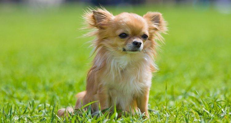 Elegir un buen nombre es fundamental para tu perro