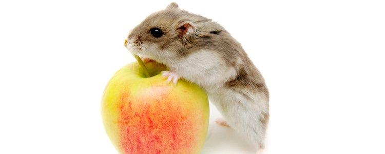 Las frutas ayudan a que su sistema inmunológico se fortalezca