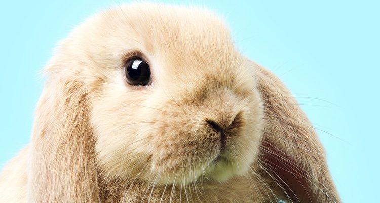 Es fundamental utilizar una serie de trucos para que el conejo sobrelleve mejor el calor de verano
