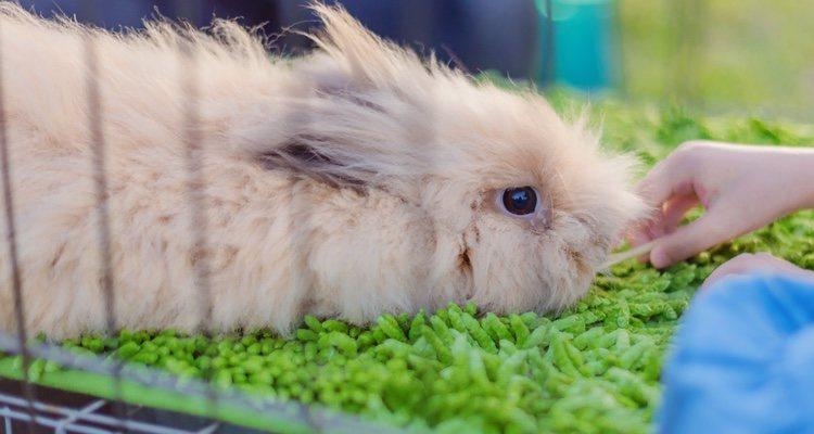 Prestar atención a la paja de la jaula así como a la alimentación del conejo