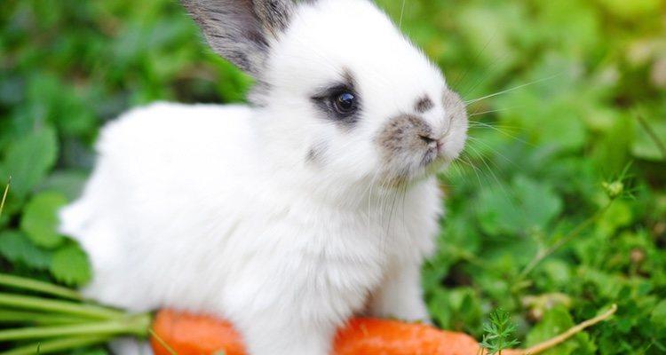 Refrescar las orejas y darle comida fresca puede hacer que tu conejo afronte mejor el calor