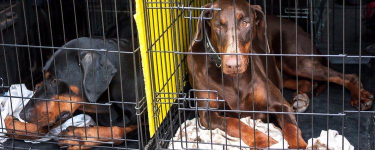 No hay separación entre el maltrato animal y el abandono animal