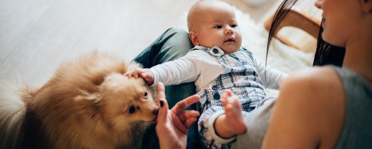Es conveniente que dejes que tu mascota se acerque de forma natural al recién nacido