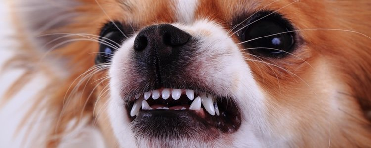 La irritabilidad es uno de los síntomas de celos que puede mostrar tu mascota