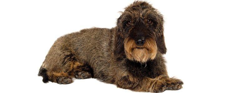 Golpear a los perros durante el adiestramiento es uno de los peores errores que se pueden cometer