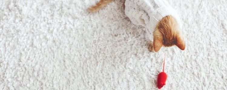 Dale un ratón de juguete, no parará de jugar con él