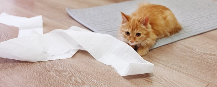 Dale un rollo de papel higiénico a un gato y estará jugando durante horas