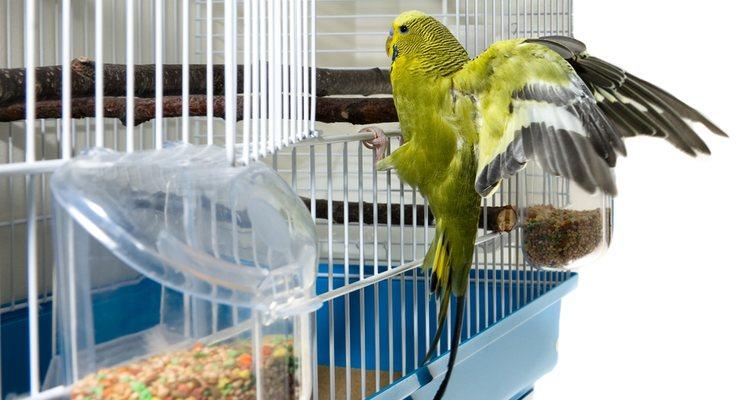 Las aves pueden consumir otro tipo de alimentos pero hay que tener mucho cuidado