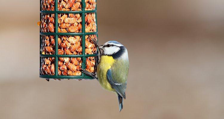Algunas barritas de semillas llevan miel y tampoco es recomendable