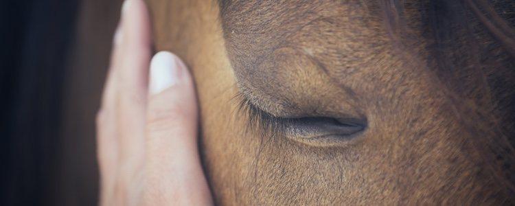 La remolacha es uno de los alimentos complementarios que más puede beneficiar al caballo