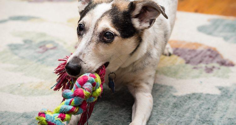 Con una simple cuerda se puede hacer un juguete