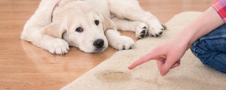 Los perros pueden llegar a actuar de ciertas formas que hasta entonces no habían hecho