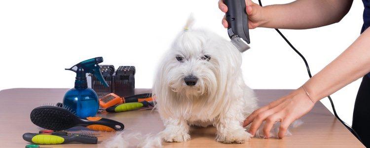 Es recomendable no cortarle el pelo con maquinilla eléctrica y utilizar mejor unas tijeras