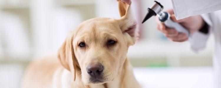 Llevar a la mascota a revisiones de forma periódica puede ser determinante para su salud