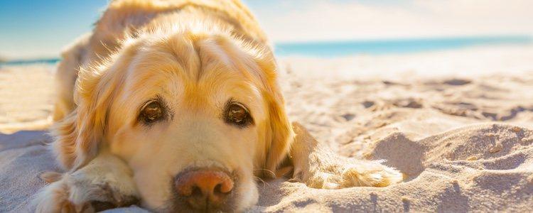 El calor puede afectar gravemente a las capacidades respiratorias del animal