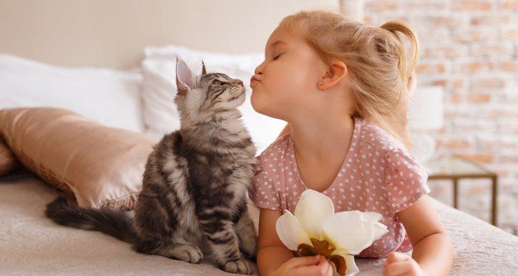 Las recompensas para tu gato son estupendas