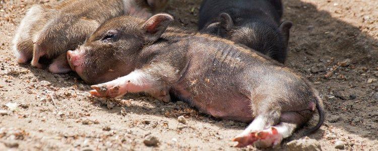Hay quienes no tienen en cuenta el peso y provocan desnutrición en el animal