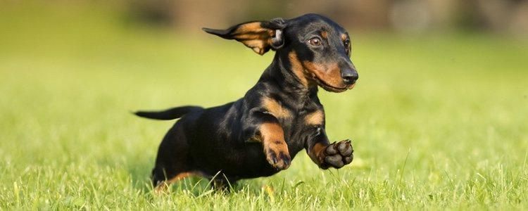 El ejercicio físico siempre ayudará a mantener una buena salud en el perro