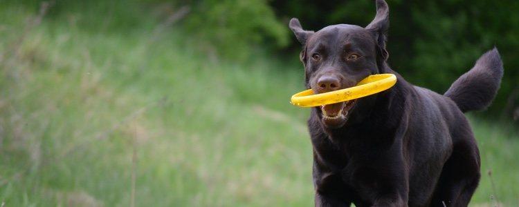 La actividad física es fundamental en la vida del animal para combatir los problemas en los intestinos