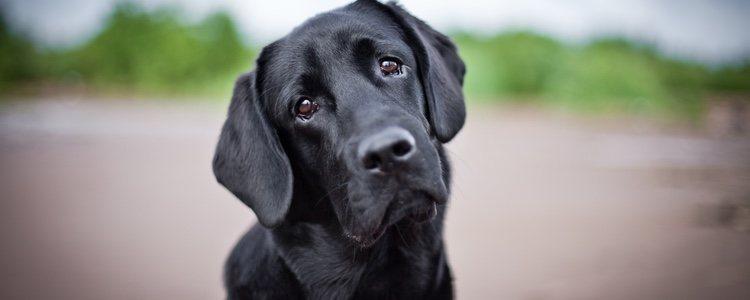 El hecho de formar una familia o echarse pareja puede desencadenar celos en el perro